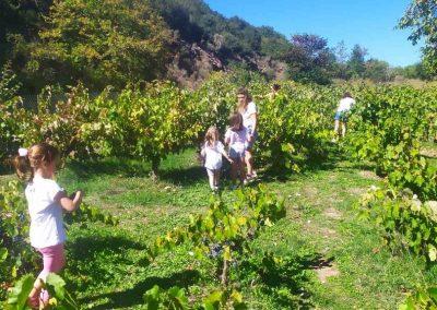Harvesting & Pressing Grapes at Orias